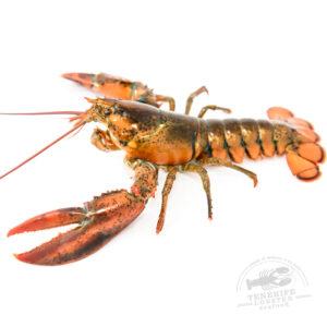 mariscostenerife-lobster-seafood-tenerife-bogavante-canadiense-00