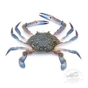 Cangrejo azul mariscos tenerife